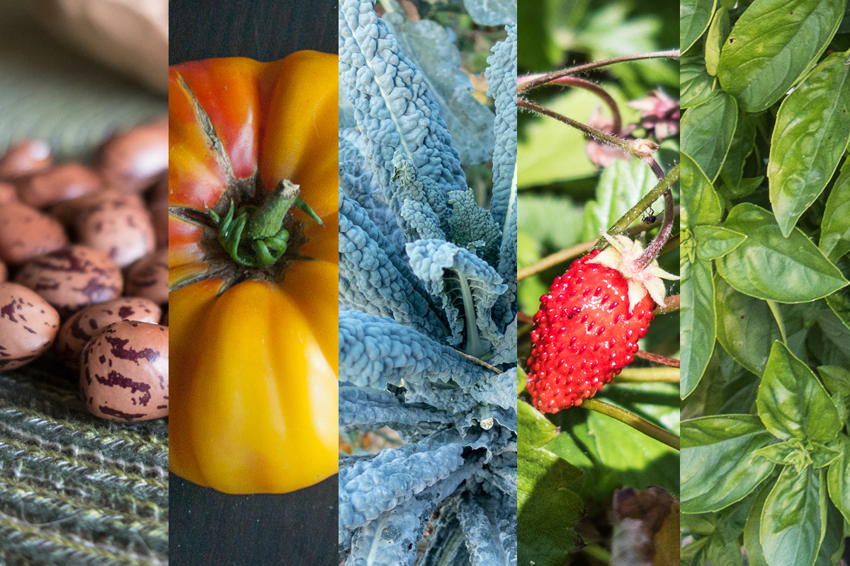 5 Plants to Get the Most Gardening Bang for your Buck