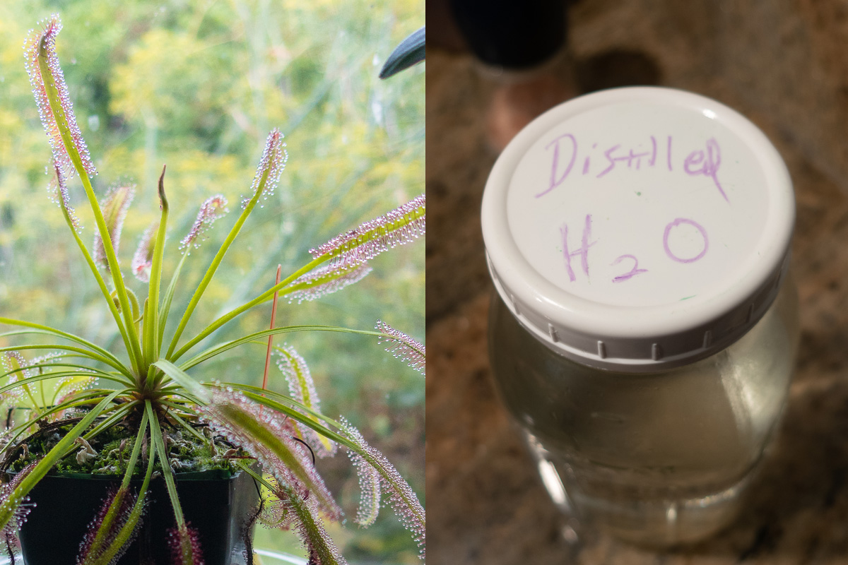 Distilling Water for Finicky Plants