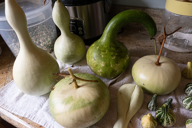 Bay Area Guide to Growing Gourds