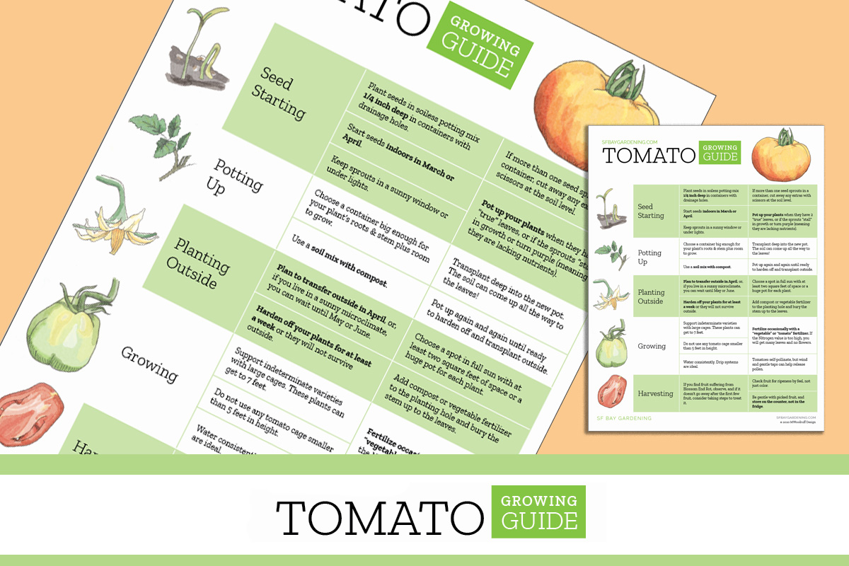 Tomato Growing Guide Printable