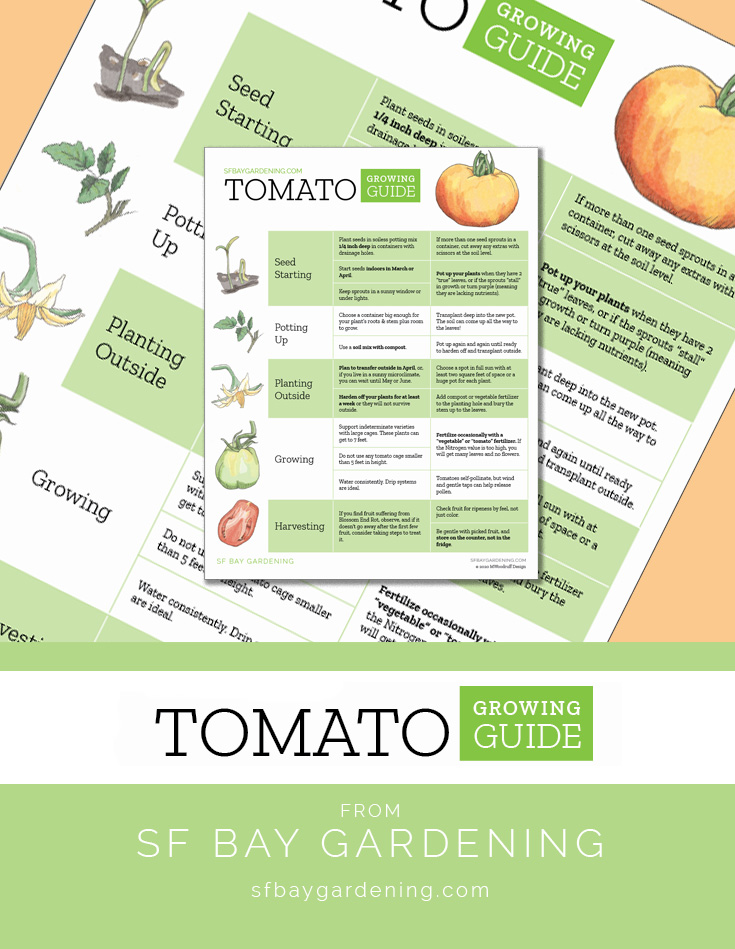 Download the Tomato Growing Guide as a printable PDF