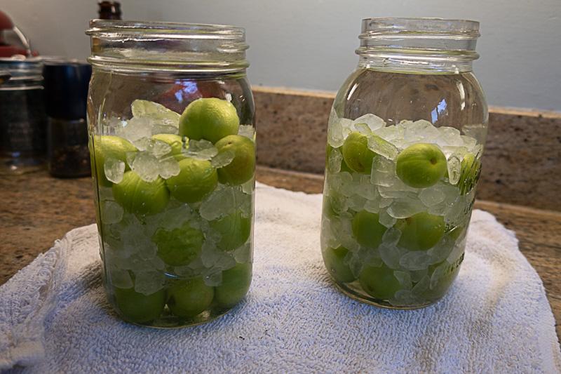 Quart jars of plum wine being made
