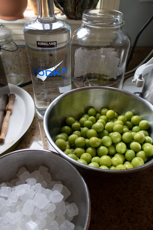 Plum wine ingredients and equipment, including Vodka, unripe plums, rock sugar, and a jar